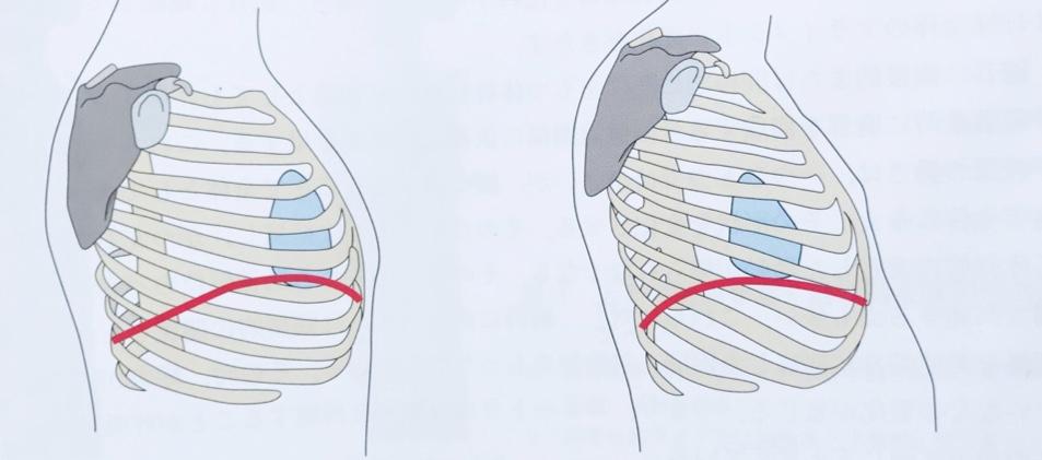 姿勢による横隔膜の変化